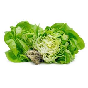 Lettuce Hydro