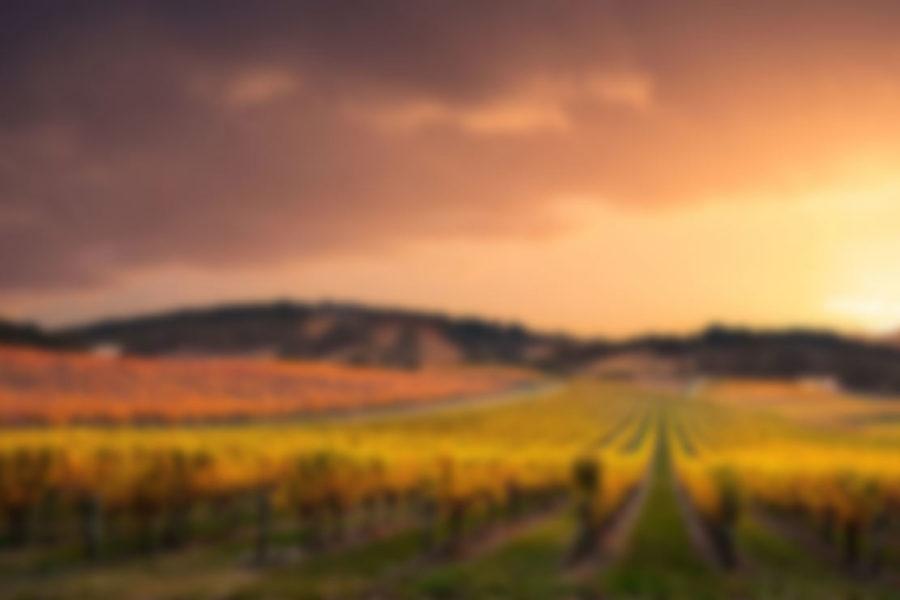 wine-slider-2-img-min-1.jpg